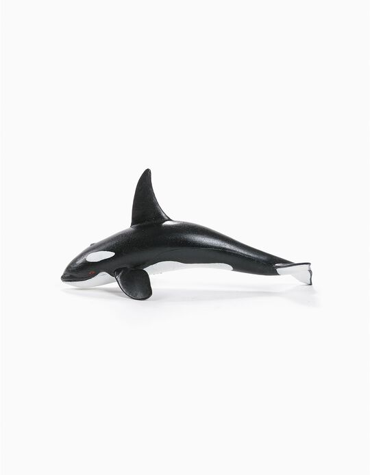Orca Science4You
