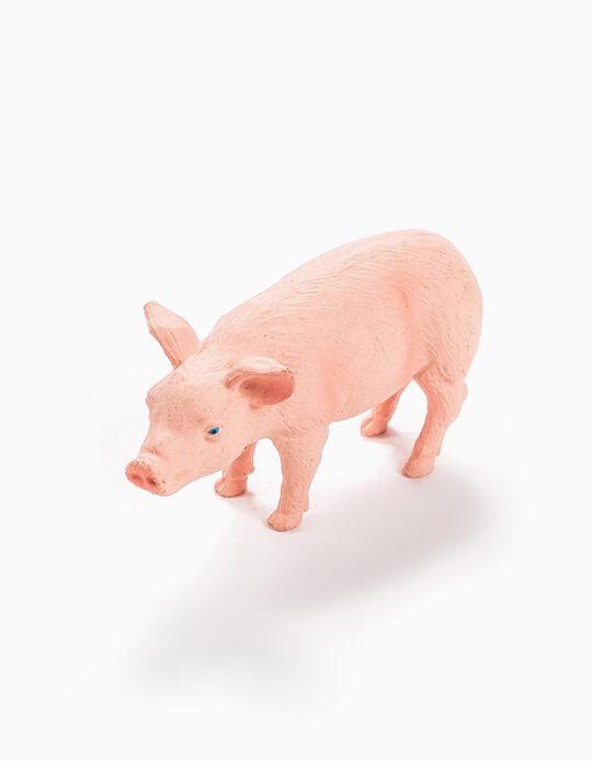 Cria De Porco Science4You